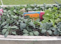 Grassland Elementary receives grant for vegetable garden | Grassland Middle School,vegetable garden,Whole Kids Foundation,schools,Franklin TN news,Franklin Home Page,FHP