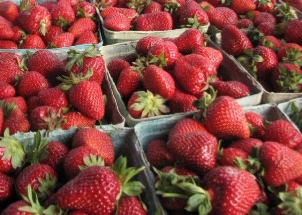 Strawberry Festival kicks off the Franklin Farmers Market | Strawberry Festival,Franklin Farmers Market,community,Franklin TN news,Franklin Home Page,FHP